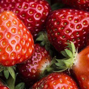 fraises REUTENAUER SAVERNE
